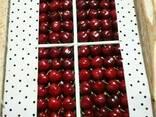 Cherry from sunny Uzbekistan - фото 2