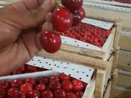 Cherry from sunny Uzbekistan - фото 5