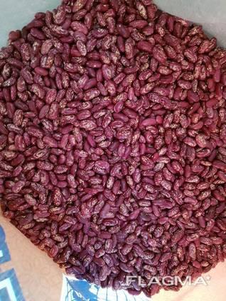 Фасоль на экспорт/ Beans for Export