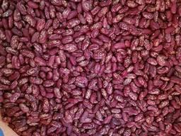Фасоль на экспорт/ Beans for Export - фото 1