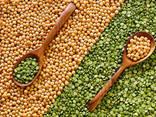 Fazole, lněná semena, čočka, cizrna, hrášek a jiné zemědělské produkty. - photo 2