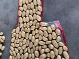 Картофель Спунта - photo 2