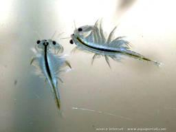 Корм для рыб - фото 2