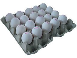 Kuřecí vejce z podestýlkových chovů, S, M, L Яйца