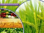 Výrobce a dodavatel pesticidů po celém světě - photo 1